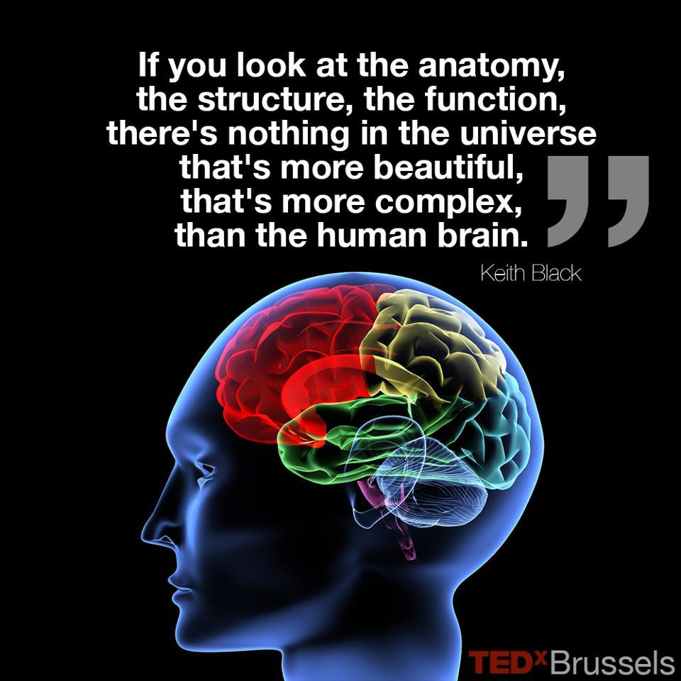 The basal ganglia and what they do for you